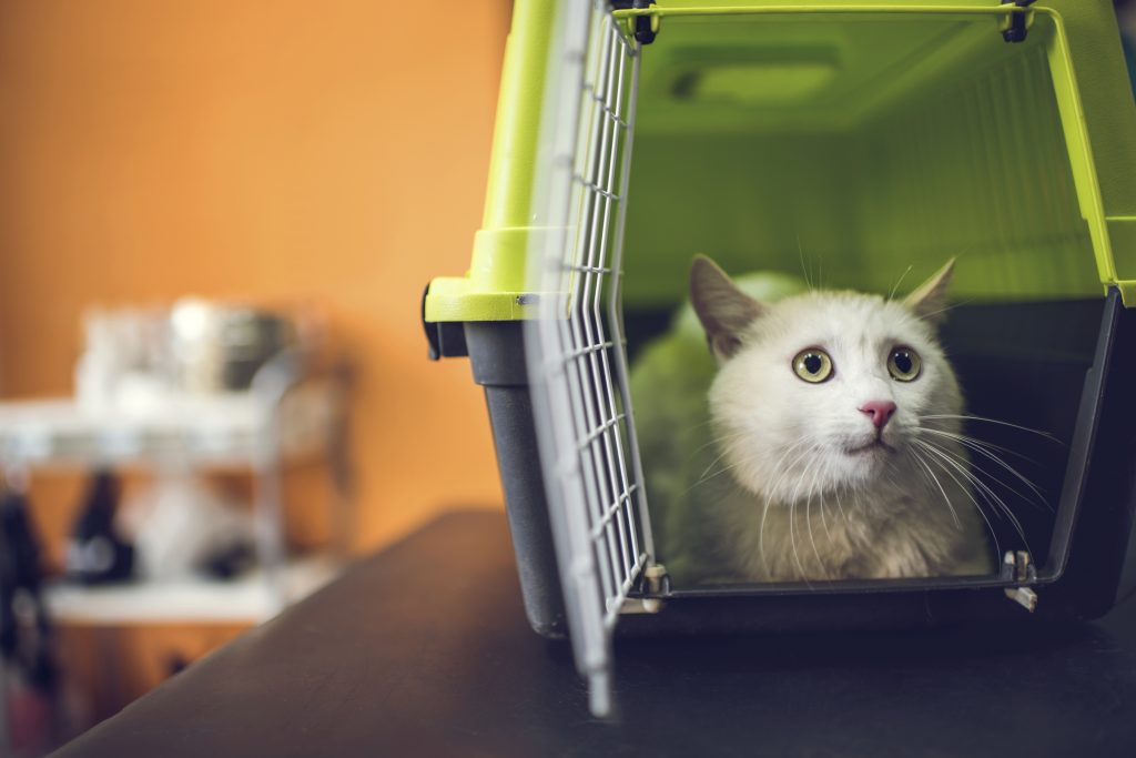 A white cat in a carrier