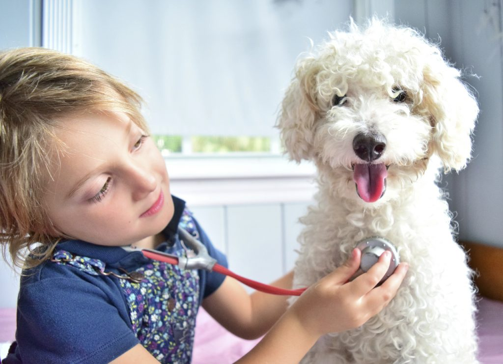A girl holding a stethoscope to a white dog