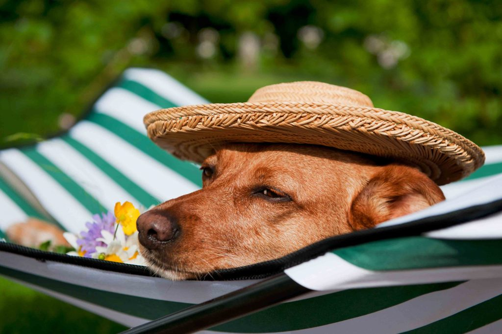 summer pet safety