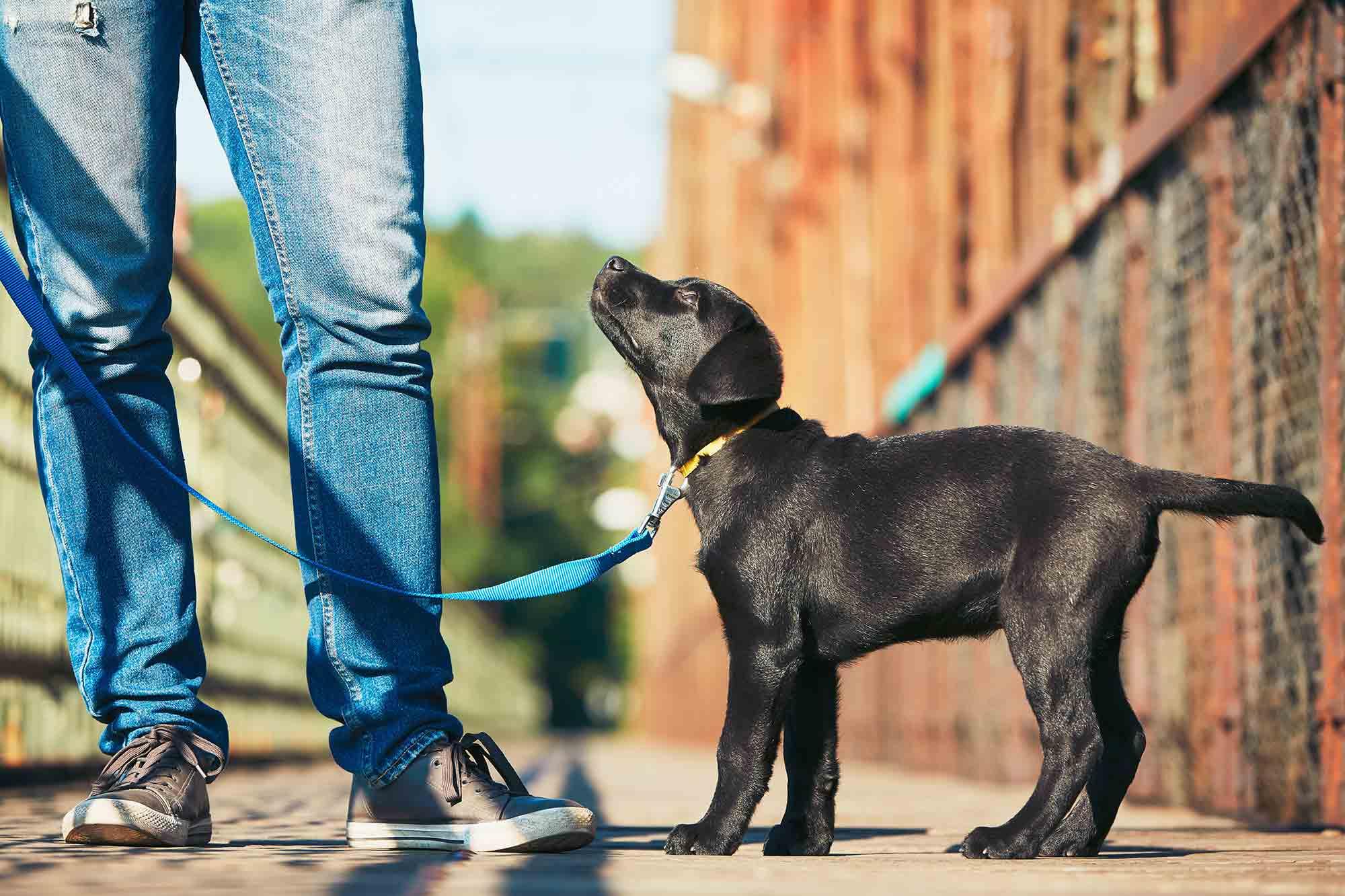 dog on leash in arlington va
