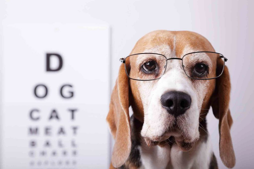 pet eye health