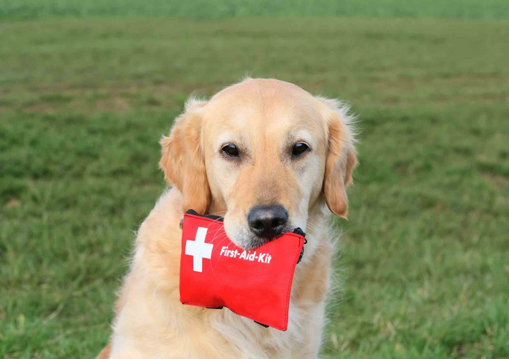 Having a pet first aid kit on hand is an easy way to protect your pet's safety