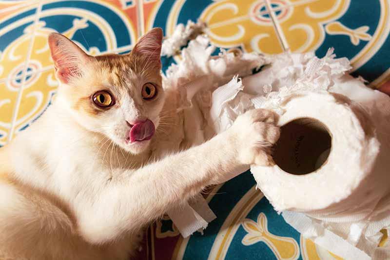 cat arlington animal hospital