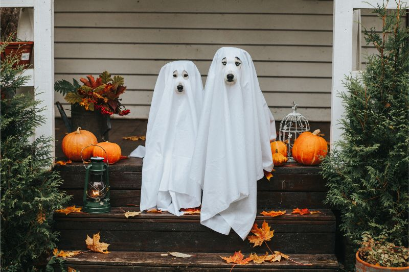 Two dogs wearing white sheets are dressed as ghosts as they sit on a porch decorated for Halloween.