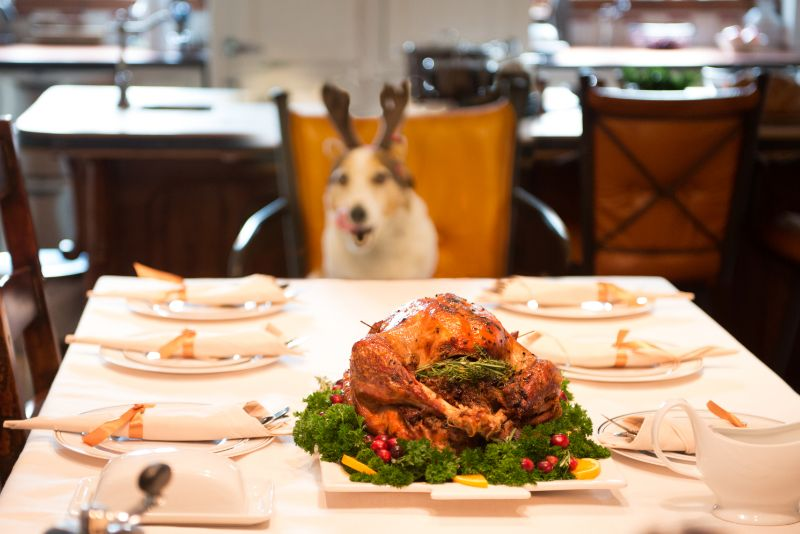 dog at holiday dinner table