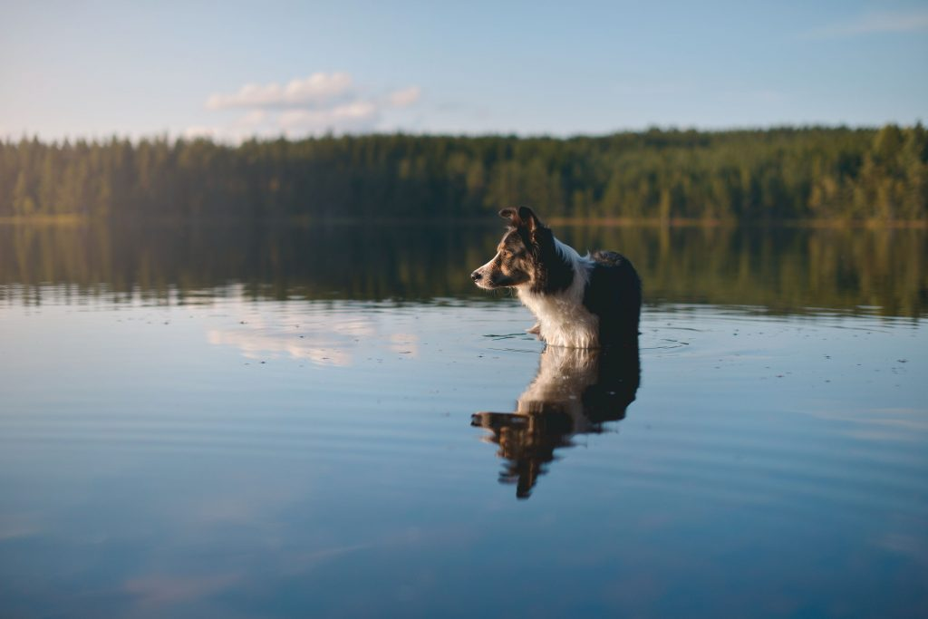 Dog water safety.