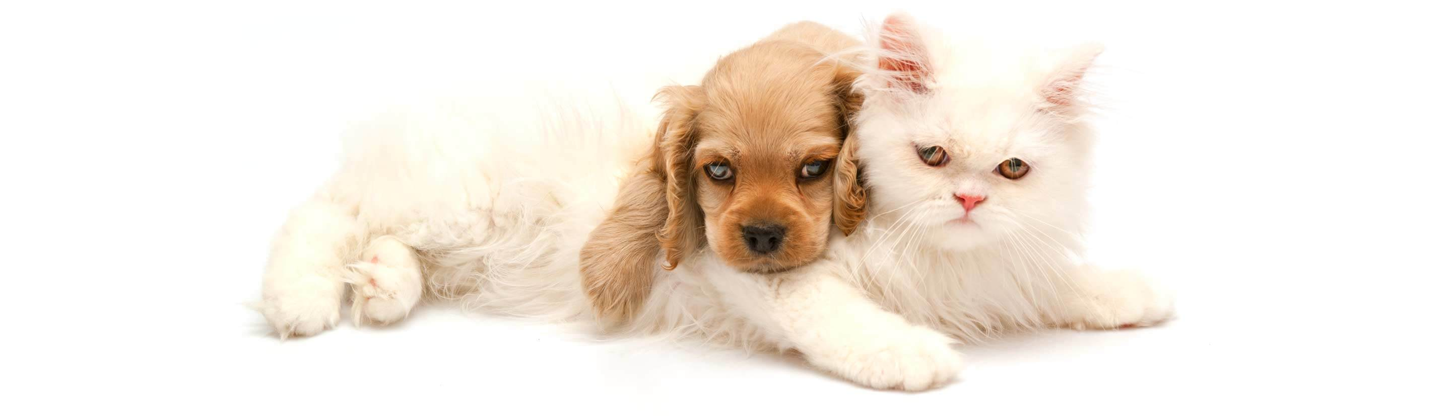 Brown Dog and White Cat