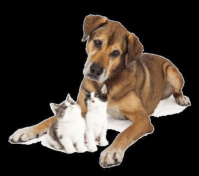 arlington veterinarian